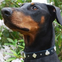 Collars for medium & large dogs