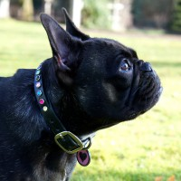 Collars for small dogs