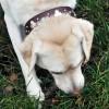 Molly wearing a Shamrock 'n' Roll