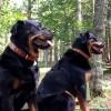 Ellie & Raven wear Mint Juleps